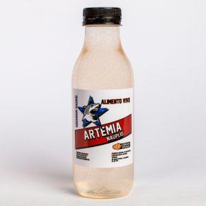 Artemia - Nauplio